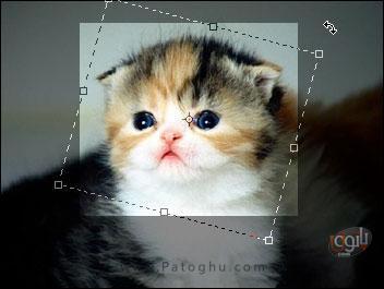 آموزش Crop با Photoshop